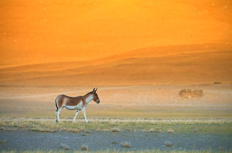 Wild (ass) Sunset