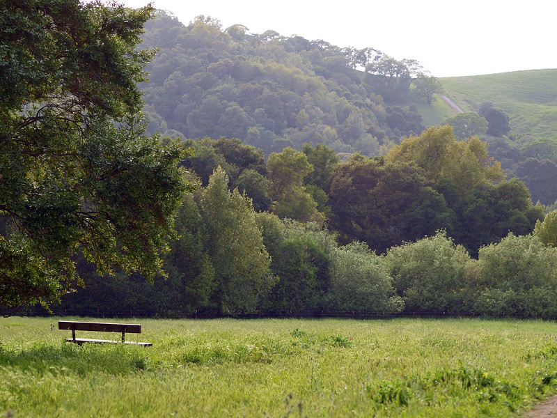 Bench and trees on Briones