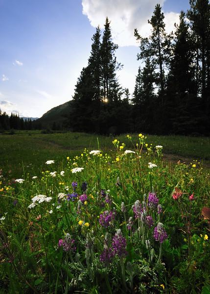 flower bouquet on Powderface trail