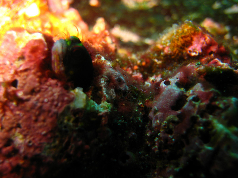 Diving in the Galapagos (78 of 392)