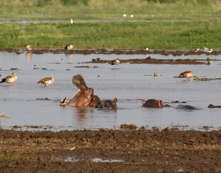 Lake Manyara 7.jpg