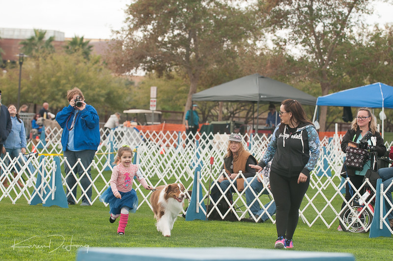 20170114_Kachina Kennel Club_Aussies-9.jpg