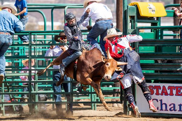 2021 Mini Bulls - Sheriffs Rodeo