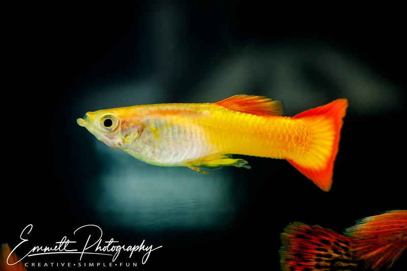 20200208-Fish-24.jpg