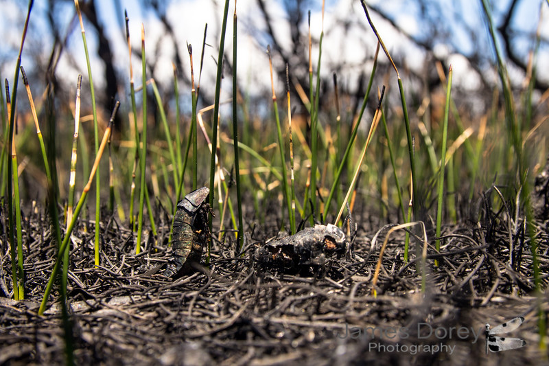 Not everything can regenerate after a bushfire