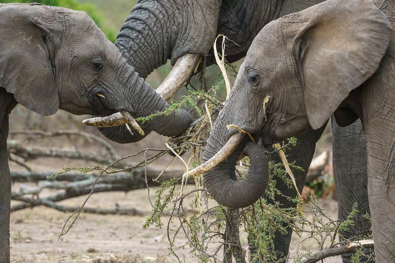 Kenya 2015-09160.jpg