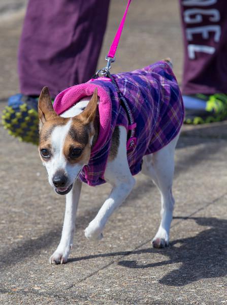 Richmond Spca Dog Jog 2018-758.jpg