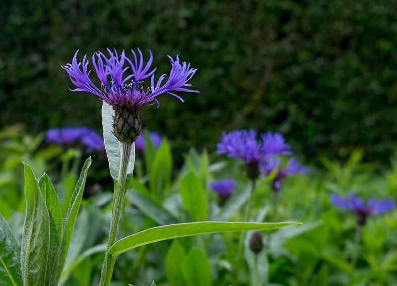Kylemore Abbey flowers.