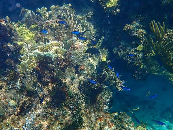 Fowl Cay Reef