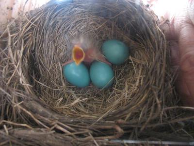 Bird Cam Images