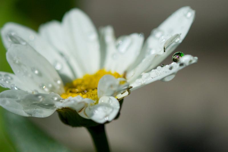 daisy0878.jpg