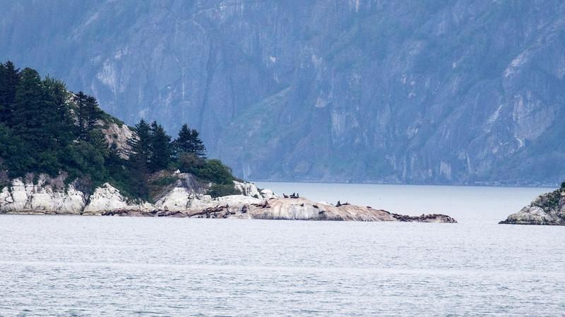 Sea Lions on an Island