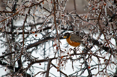 201304 Winter Birds