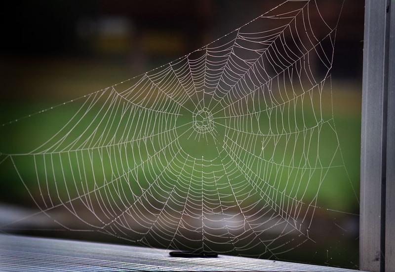 spiderweb_lowres.jpg