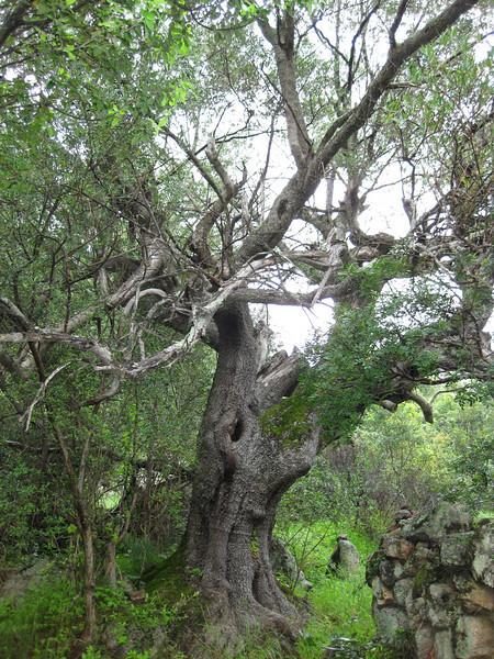 france;bonifacio;2009;nature;