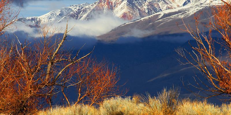 Afternoon, White Mountains Bishop California