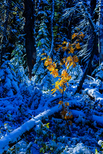 Leavenworth_Enchantments_10_17 (62 of 301).jpg