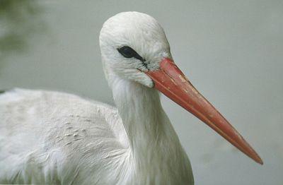 Storks & Herons