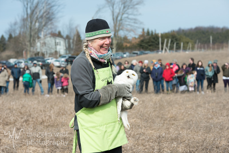 wings of wonder snowy owl release march 4-5614.jpg