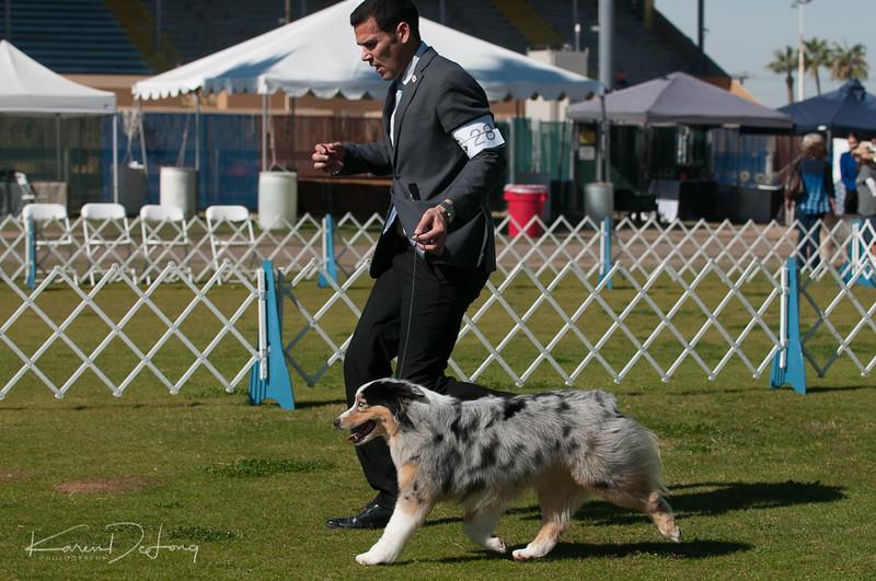 20170205_Australian Shepherds_Lost Dutchman Kennel Club-147.jpg