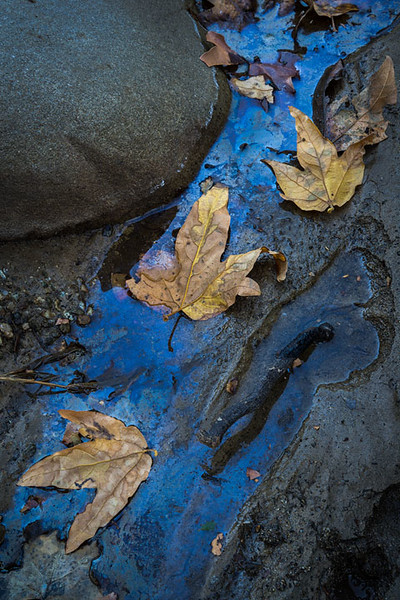 Castaic_Creek_Fall_Color_Southern_California_DSC3491 b.jpg