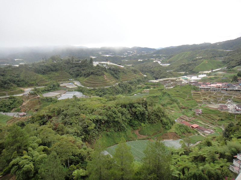 View from window at Cameron Highlands (2).JPG