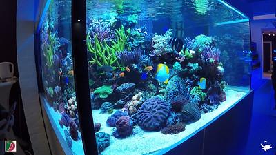 Urban Reef Corals - Sunken Dreams in Schools Group 1
