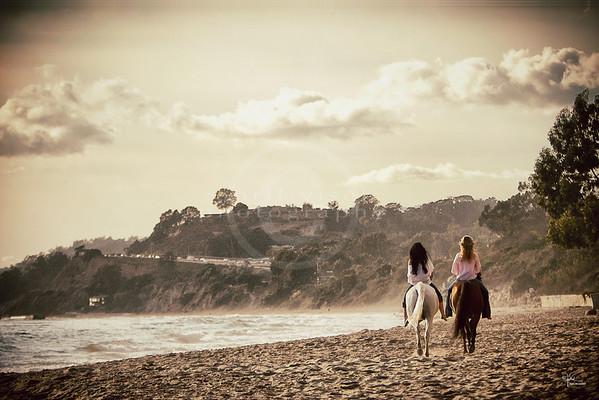 Saphire Arabians