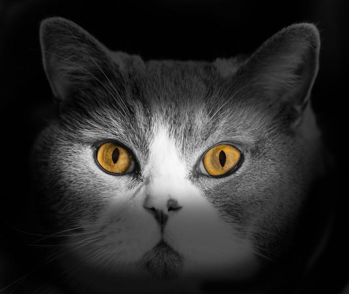 thema ogen  (9).jpg