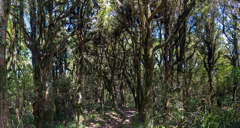 098_Panorama_Mount-Taranaki-Gobblin-Forrest.jpg