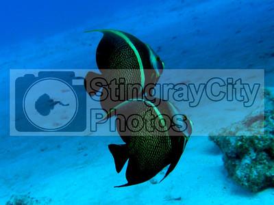 31 Aug Eddie's Bonus Underwater Photos