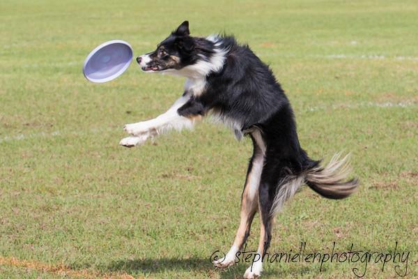 _MG_2612Up_dog_International_2016_StephaniellenPhotography.jpg