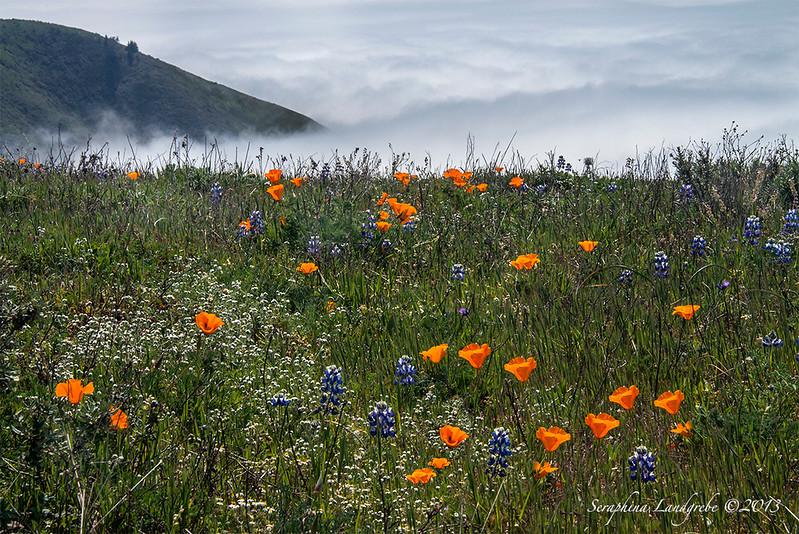 _DSC6297Wildflowers Garrapata.jpg
