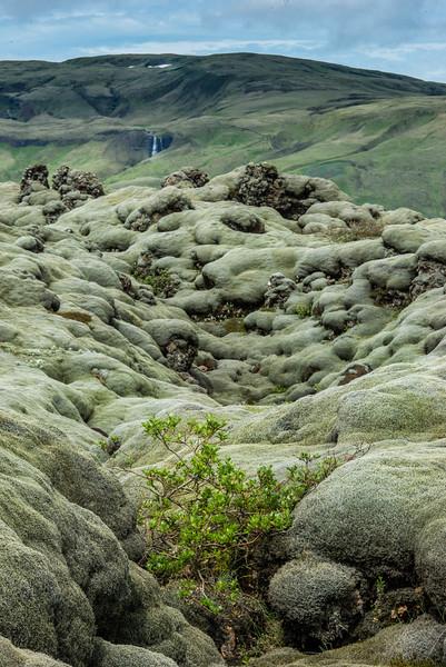 ICELAND- MOSSY ROCKS-42.jpg