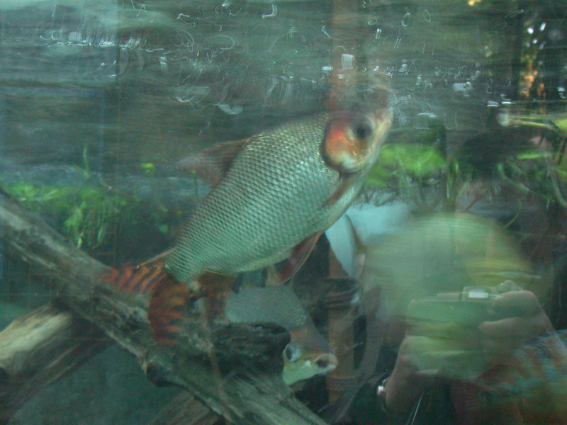 bigfish 2 again