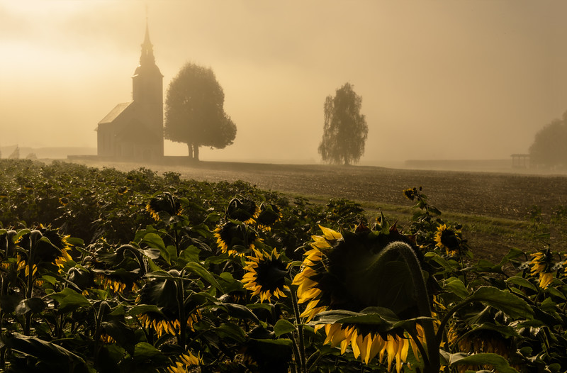 SLOVENIA - CHURCH WITH SUNFLOWERS-0126-Edit.jpg