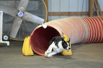 Flexible Flyers CPE Agility Trial July 18-19
