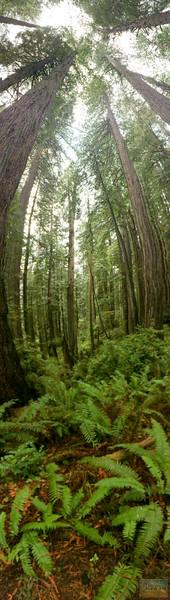 20141015_RedwoodsiPhone_0013.jpg