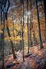 Beautiful autumn trail winding through a mountain during autumn.