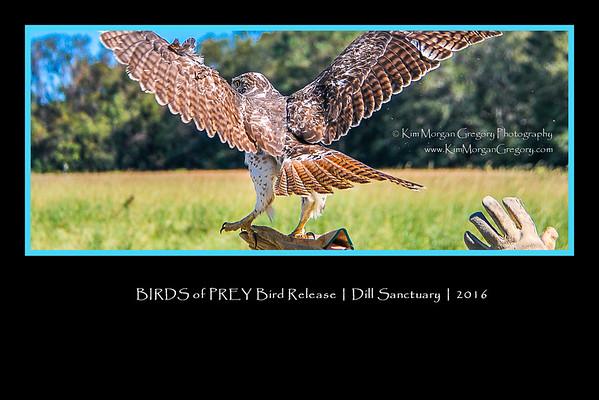 BIRDS of PREY | Bird Release | Dill Sanctuary | 2016