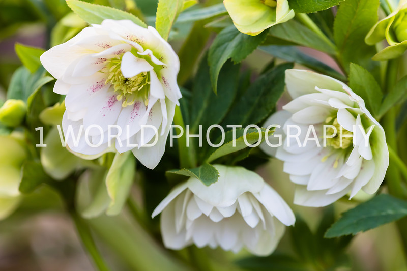 20190416Spring Flowers_Cantigny 4_17_19246--59.jpg