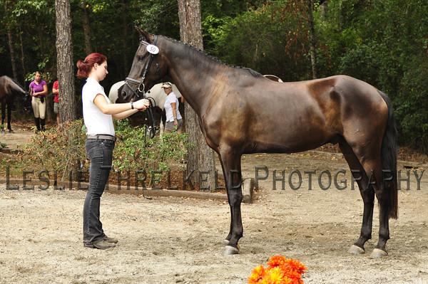 Trojan Horse - 50