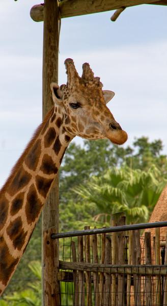 R_Tampa_Zoo-383-Edit.jpg