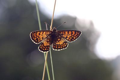 Butterflies France July 2015
