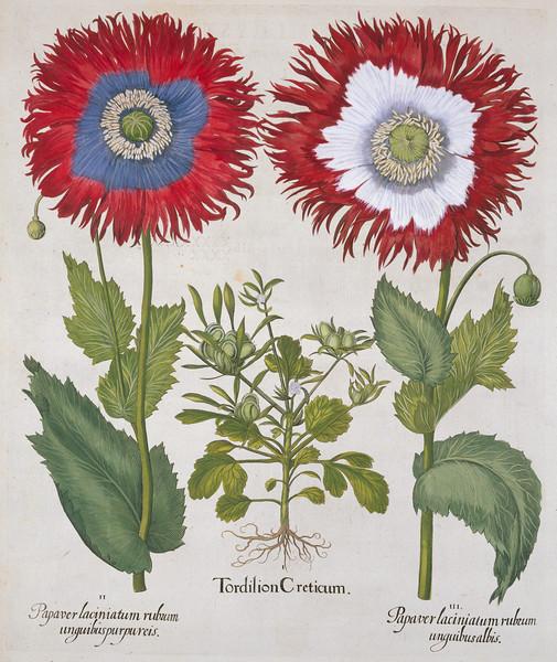 Blumen History