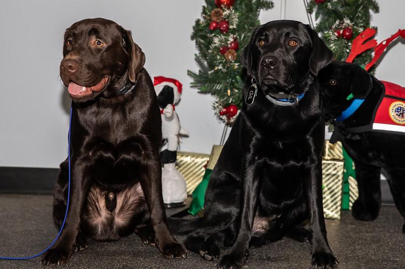 Dogs (188 of 282).jpg