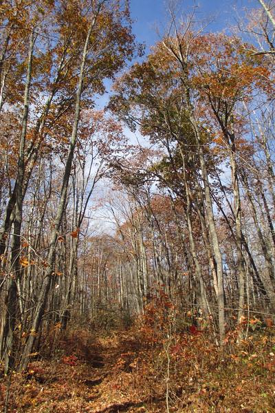 Big Green Trail - 4,100'