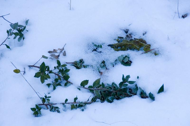 Yosemite_Snow-2.jpg