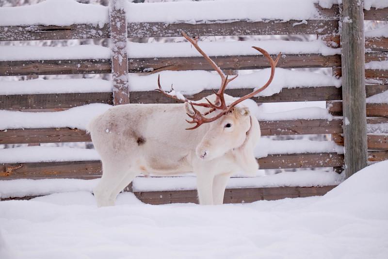 Finland_160117_86.jpg