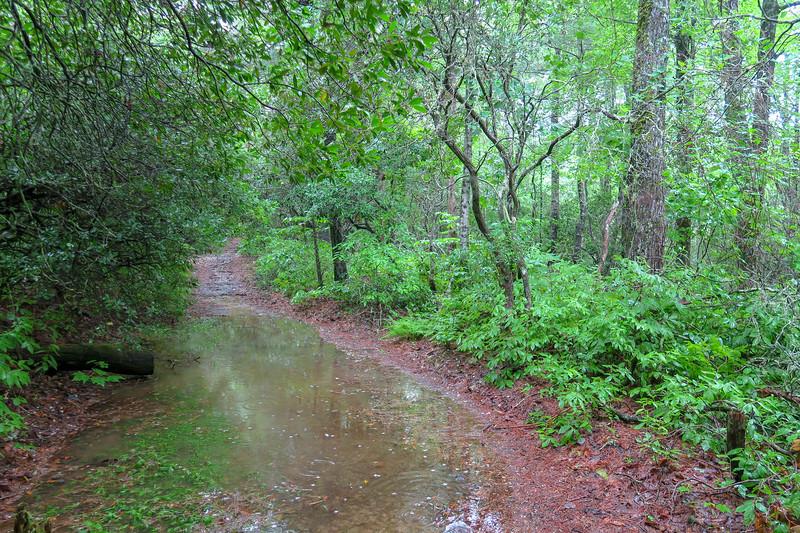 Barnett Branch Trail -- 3,240'